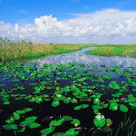 Airboat Tour through the Everglades